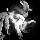 Morning Whippet by Shirin Hodgson-Watt