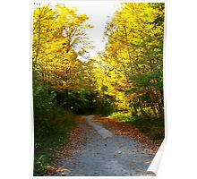 Forest paths of serenity Poster