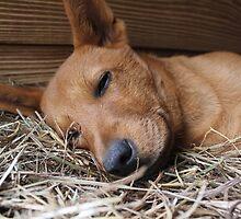 Sleepy Baby by DebbieCHayes