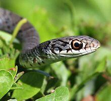 Florida garter snake by jozi1