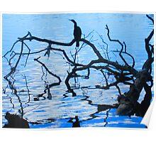 cormorant silhouette Poster