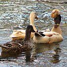Duck Trio by Jennie L. Richards
