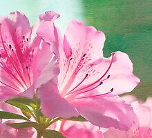 Fleurs de couleur rose by KBritt