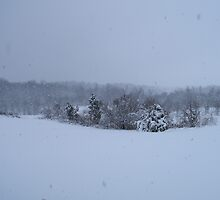 Winter Wonderland by Mirenda Wells