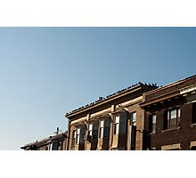 Many Pigeons Roof Photographic Print