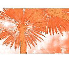Palm Tree Abstract Photographic Print