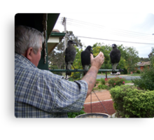 Me and the juvenile magpies. Canvas Print