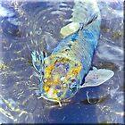 Something's a little Fishy by Brenda Boisvert