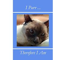 I Purr ... Therefore I Am, Siamese Cat Photograph Photographic Print
