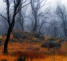 One misty day by Chris Brunton