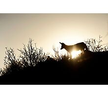 dusk patrol Photographic Print