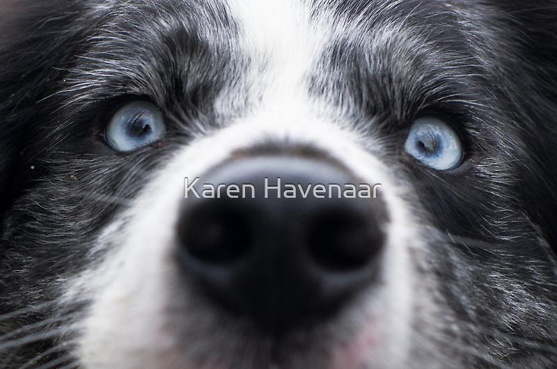 Blue Eyes by Karen Havenaar
