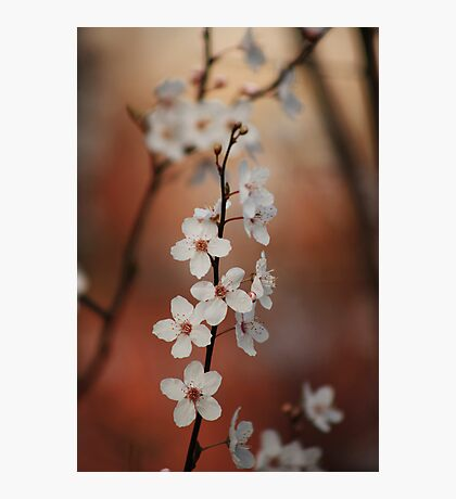 Spring Beauty Photographic Print
