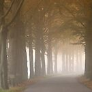 Country Road in Autumn by ienemien