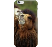 Camels Pride iPhone Case/Skin
