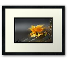 Rose in Light 2 Framed Print