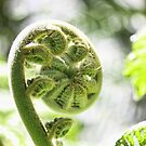 New Zealand Fern in Spring by Giovanna Tucker