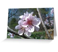 Just Peachy Flowers Greeting Card