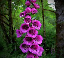 Wild Foxgloves by Charles & Patricia   Harkins ~ Picture Oregon