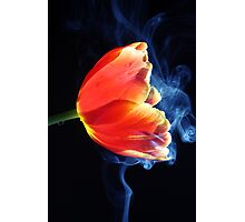 Tulipe in smoke. Photographic Print