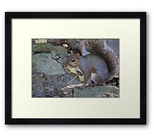 What are you looking at? Framed Print