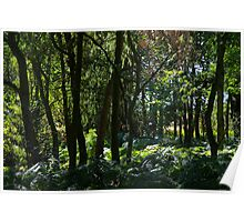 English Rain Forest Poster