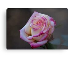 Roses Are Not Always Red... Metal Print