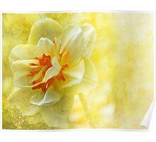 Lemon Yellow Daffodil  Poster