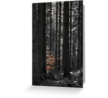 Among Giants Greeting Card