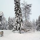 Deer in Lapland by iamsla