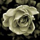 Rose Yellow by SuddenJim