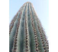 Saguaro ribs Photographic Print
