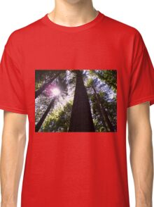 The sun shines through in the Redwoods Classic T-Shirt