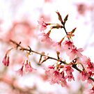 Blossoming by Lisa Williams