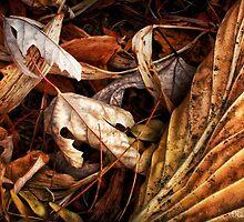 Remnants  by Nadya Johnson