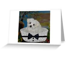 ❤ 。◕‿◕。 I HEAR THE SOUND OF CAR KEYS AM I GOING 4 A RIDE?? ❤ 。◕‿◕。 Greeting Card