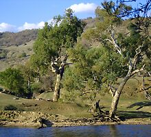 On The Banks Of The Murray by Terry Everson