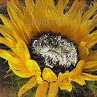 Vintage Sunflower by Karen Lewis