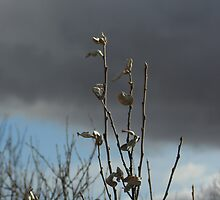 Winter Branches by Darcy Overland
