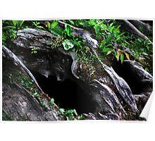 Hollowed Stump Poster