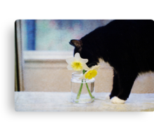 Spring is here Canvas Print