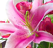 Pink Lilly by Jay Reed