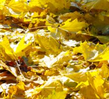 Selective focus on the yellow fallen autumn maple leaves closeup Sticker