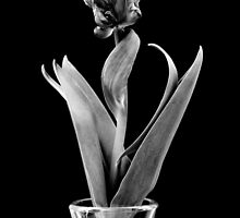 Elegance in Soft Black and White. by Helen J Cherry