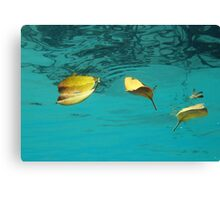 Three and a Flower Canvas Print