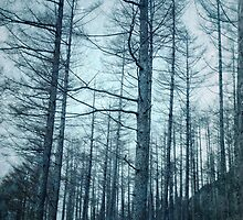 Cold Woods by Nikki Smith