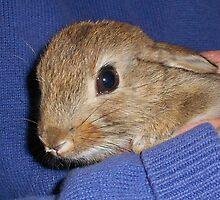 Wild bunny safe and sound! by Marilyn Grimble