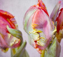 colours of spring by Iris Lehnhardt