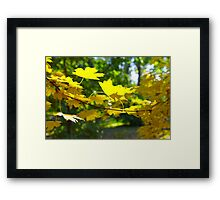 Maple branch with yellow leaves in the foreground Framed Print