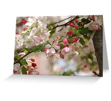 CHERRY BLOSSOMS! Greeting Card